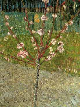 Almond Tree in Blossom - Vincent van Gogh