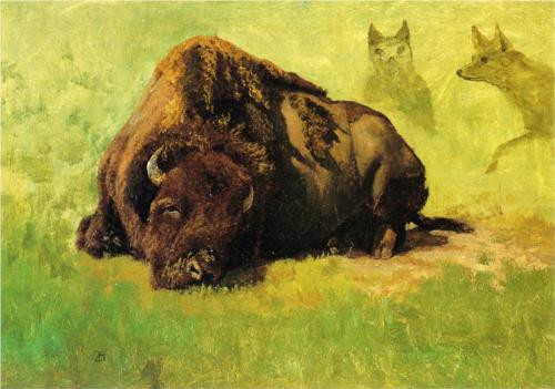 Bison with Coyotes - Albert Bierstadt