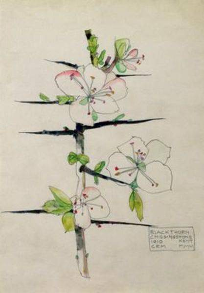 Blackthorn Chiddingstone Kent - Charles Mackintosh