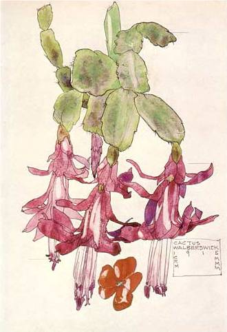 Cactus Flower - Charles Mackintosh