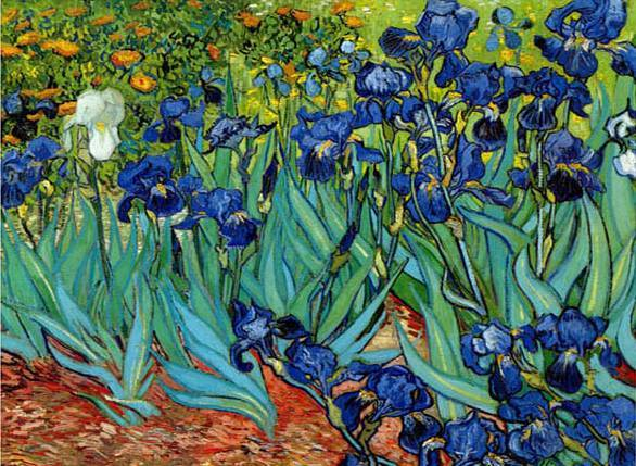 Irises at St. Remy - Vincent Van Gogh