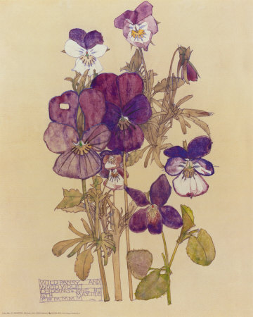Wild Pansy - Charles Mackintosh